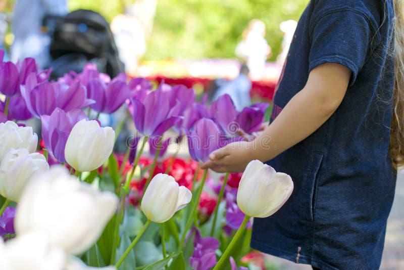 小女孩和美丽的郁金香 阳光和花 复制空间 图库摄影
