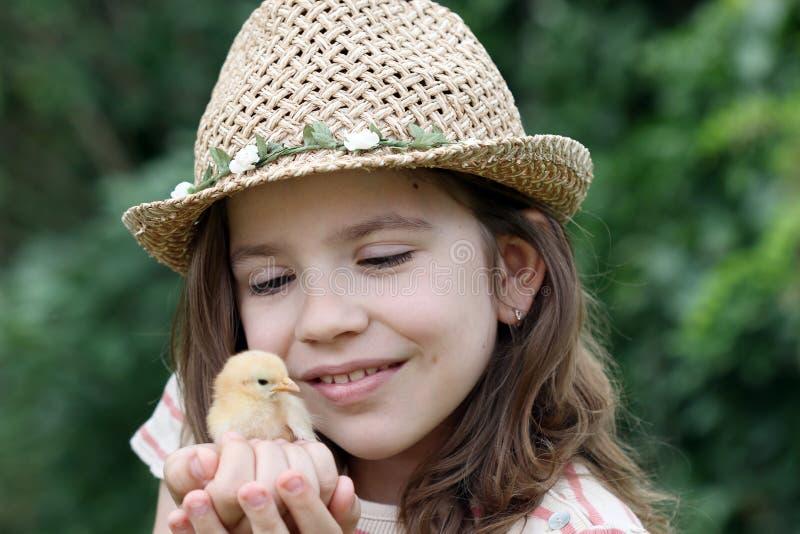 小女孩和逗人喜爱的黄色鸡 库存照片