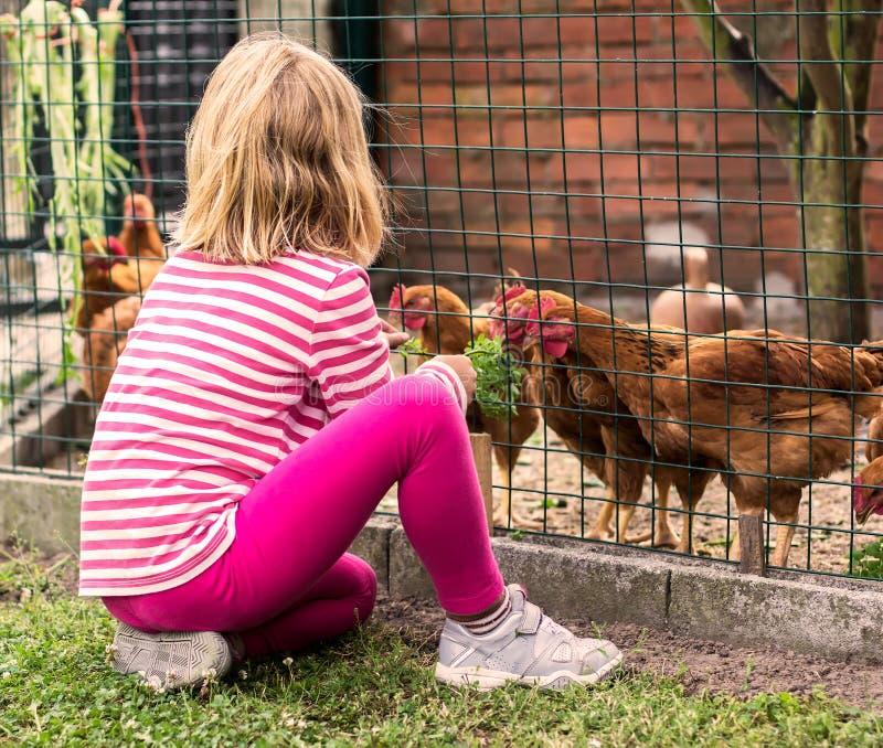 小女孩哺养的母鸡 免版税库存图片
