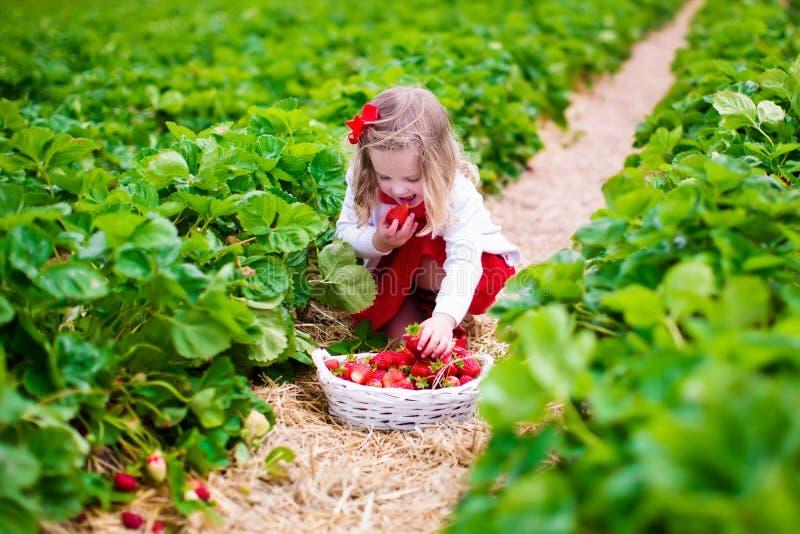 小女孩在农田的采摘草莓 免版税图库摄影