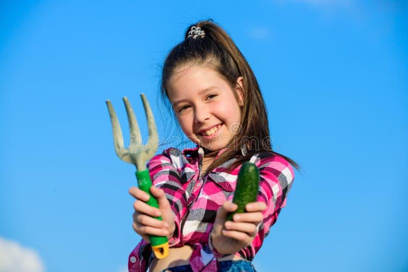 小女孩在家庭农场的花匠工作 孩子快乐的花匠拿着犁耙和黄瓜蓝天背景 女孩 库存图片