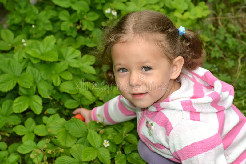 小女孩打破从床的草莓莓果 库存照片