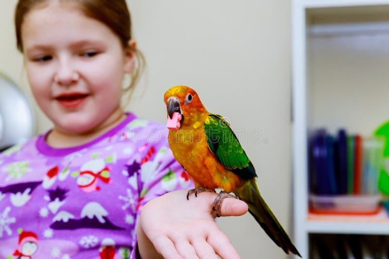 小女孩握鹦鹉手 图库摄影