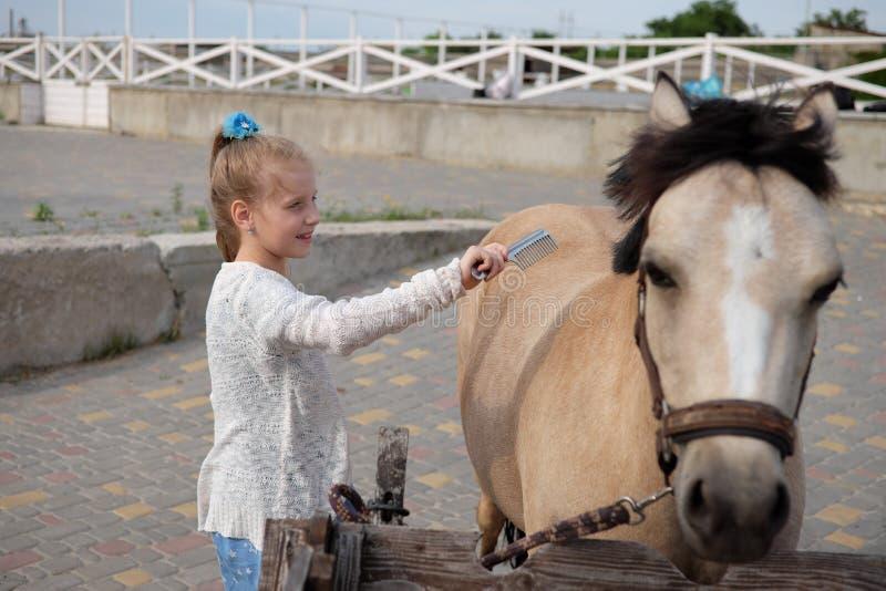 小女孩清洗并且梳她的小马并且备鞍他 免版税库存照片