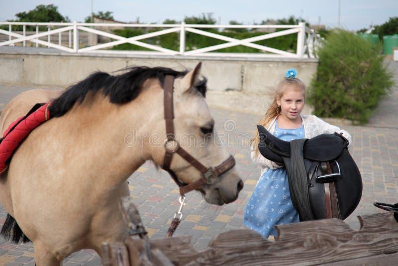 小女孩清洗并且梳她的小马并且备鞍他 库存图片