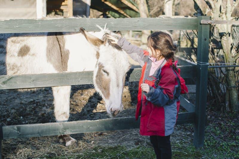 小女孩爱抚驴投入她阻止篱芭 免版税库存照片