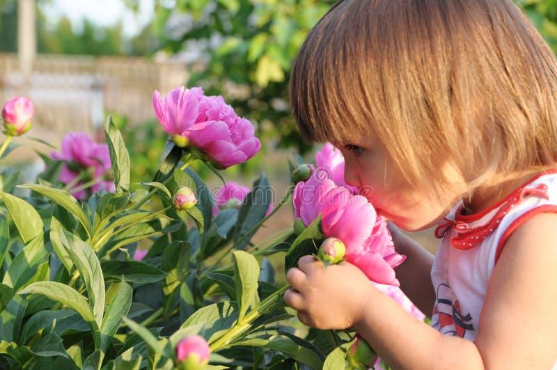 小女孩画象气味开花的牡丹在夏天 库存图片