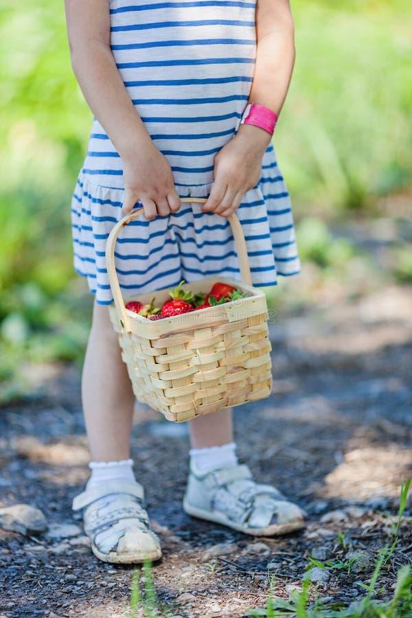 小女孩递拿着篮子有很多草莓在采撷您自己的农场 免版税库存图片