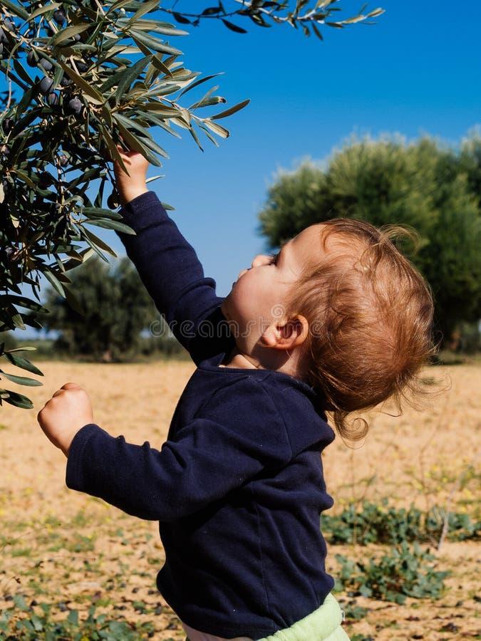 小女孩采摘从植物的橄榄 库存照片