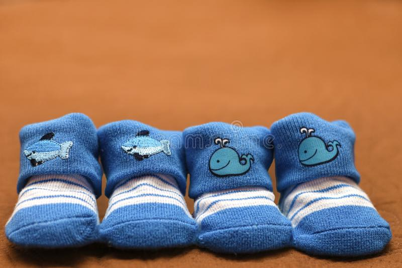 小婴孩袜子 库存图片