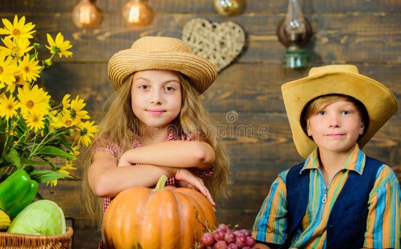 小学秋天节日想法 孩子女孩男孩穿戴帽子庆祝收获节日土气样式 庆祝收获 库存照片