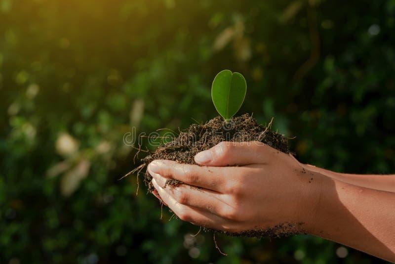 小孩手小心和植物在黑土壤的年轻幼木 图库摄影