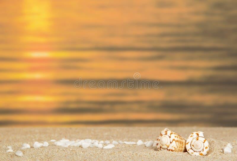 小小卵石和海扇壳 免版税库存图片