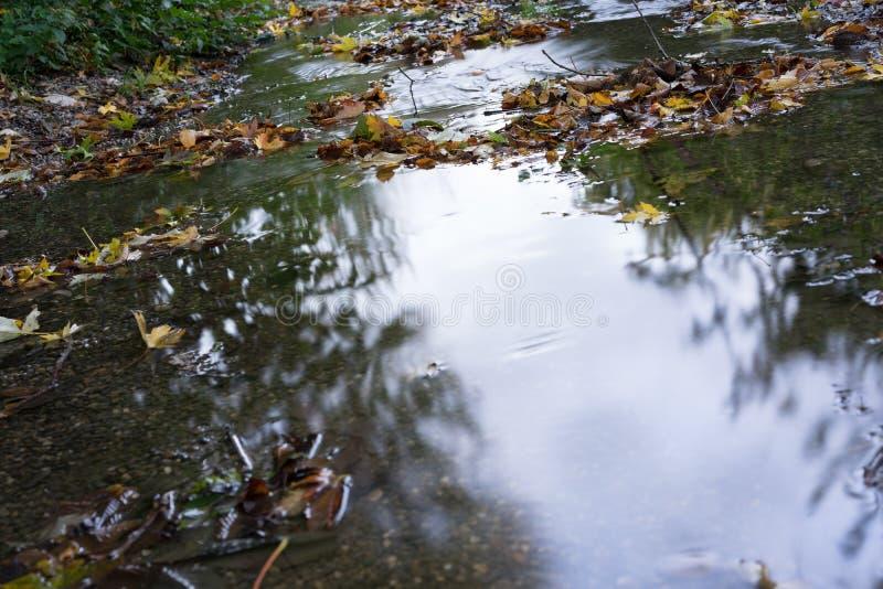小小河在有水反射和夏天秋天的长的曝光秋季结尾的森林公园 库存图片