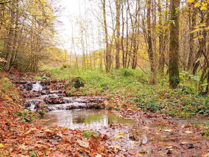 小小河在Thuisbrunn附近的秋天在法兰克的瑞士 库存图片