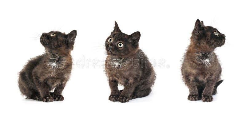 小小猫位置 免版税库存照片