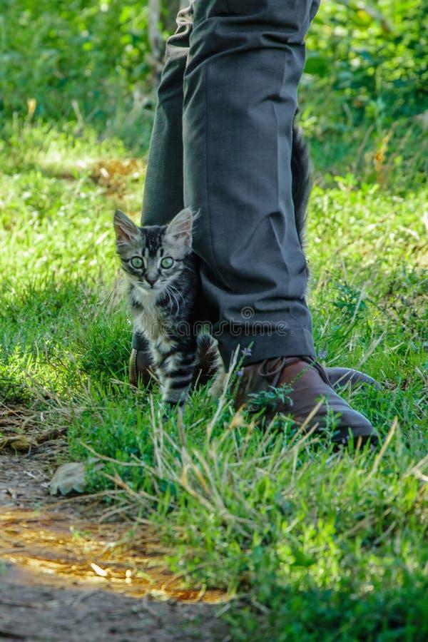 小小猫在商人的脚 免版税库存照片