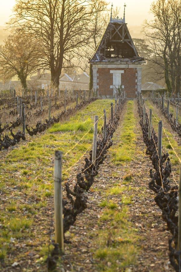 小屋在葡萄园里,博若莱红葡萄酒,法国 免版税库存图片