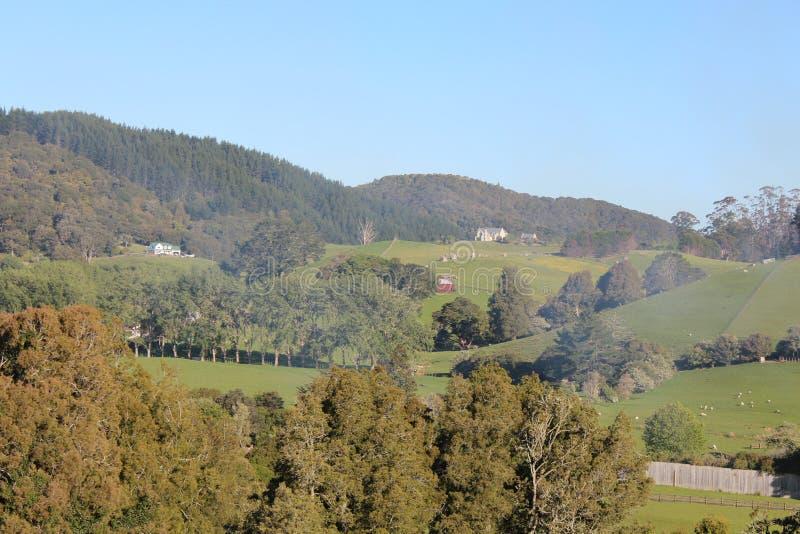 小山、草甸和灌木在新西兰绵羊种田 免版税图库摄影