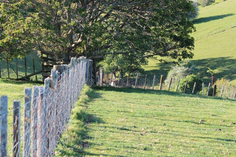 小山、草甸和灌木在新西兰绵羊种田 库存照片