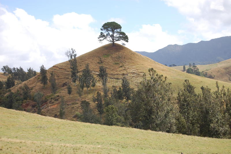 小山一结构树 库存照片