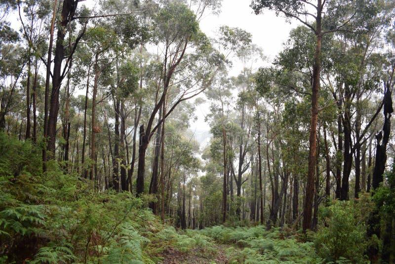 小山下来森林道路 库存图片
