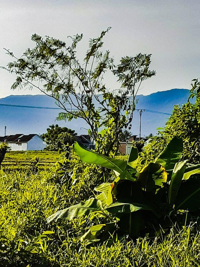 小山和庭院围拢的绿色住宅大气 库存照片