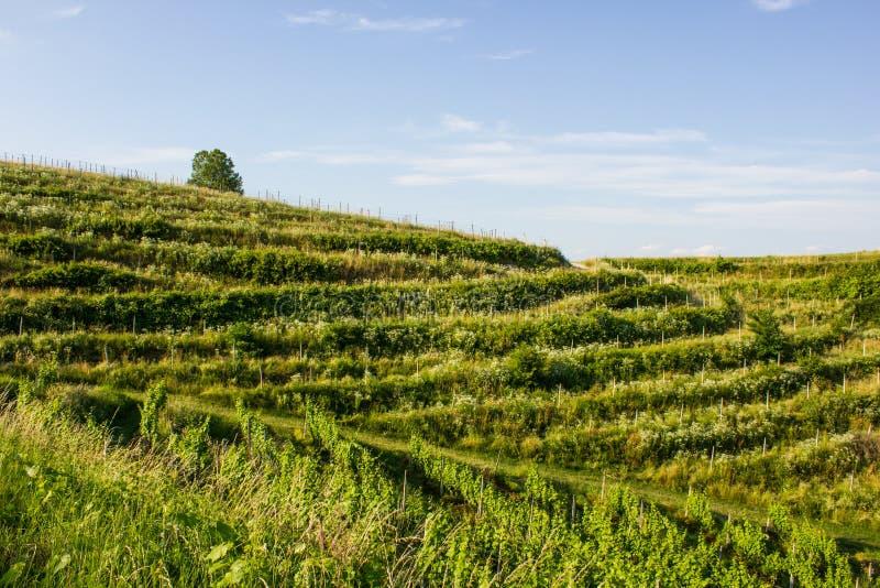 小山在北克罗地亚 库存照片