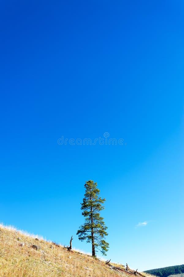小山孤立结构树 库存图片