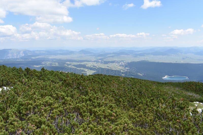 小山松、松属Mugo在Crvena Greda峰顶的上面和看法从上面 库存图片
