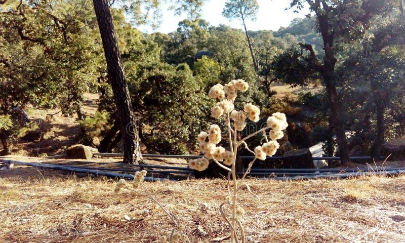 小山的一棵用花装饰的植物 库存照片