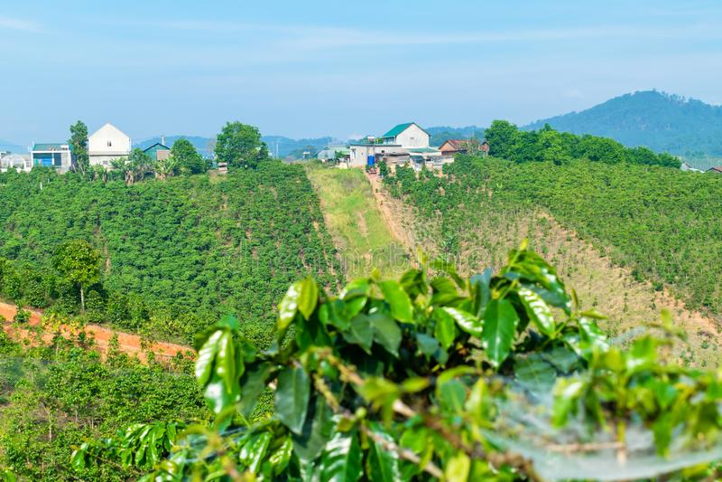 小山的咖啡种植园与在阳光下的房子在大叻越南 库存照片