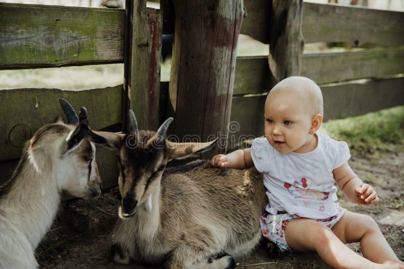 小山羊和小宝宝玩得开心 库存图片