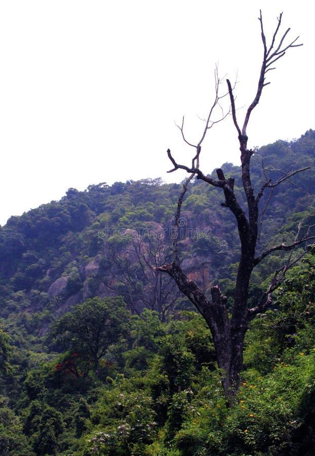 小山死的树 库存照片