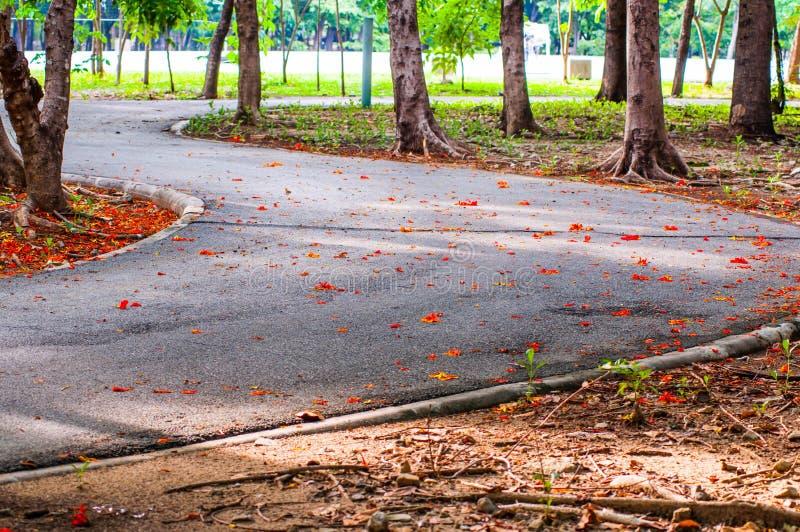 小径和树自然在庭院里 免版税库存照片