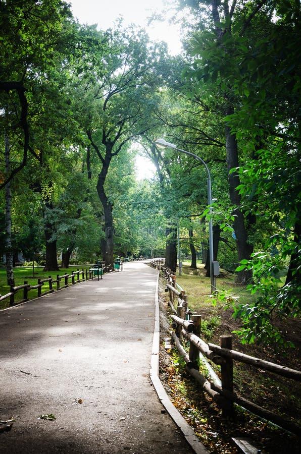 小径在城市公园 库存照片