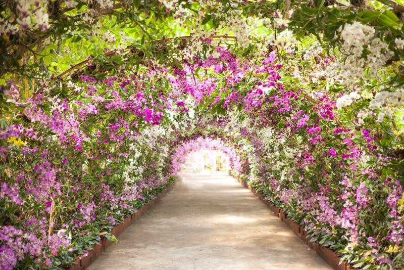 小径在有排行道路的兰花的一个植物园里 图库摄影