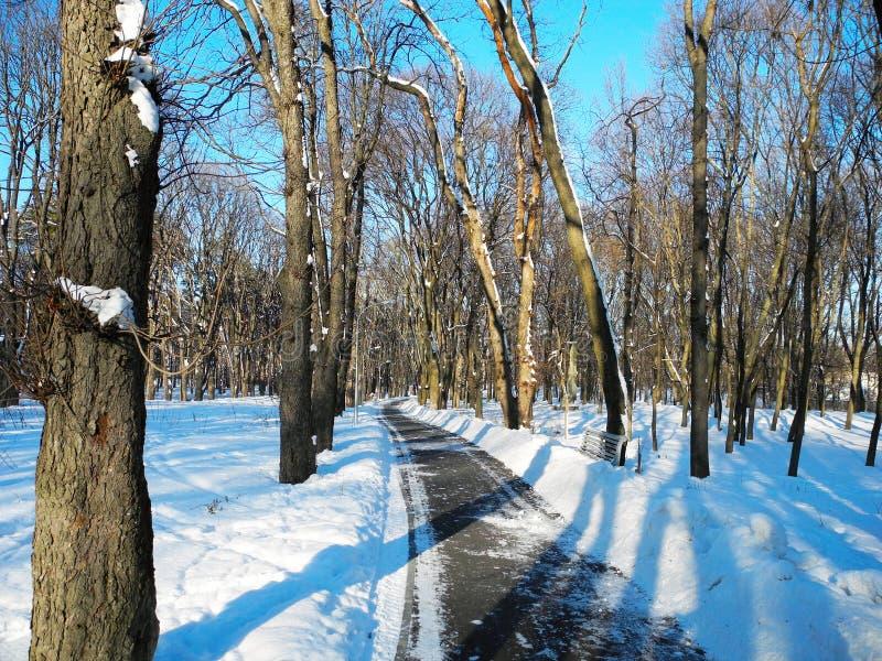 小径在积雪覆盖的公园 免版税库存图片