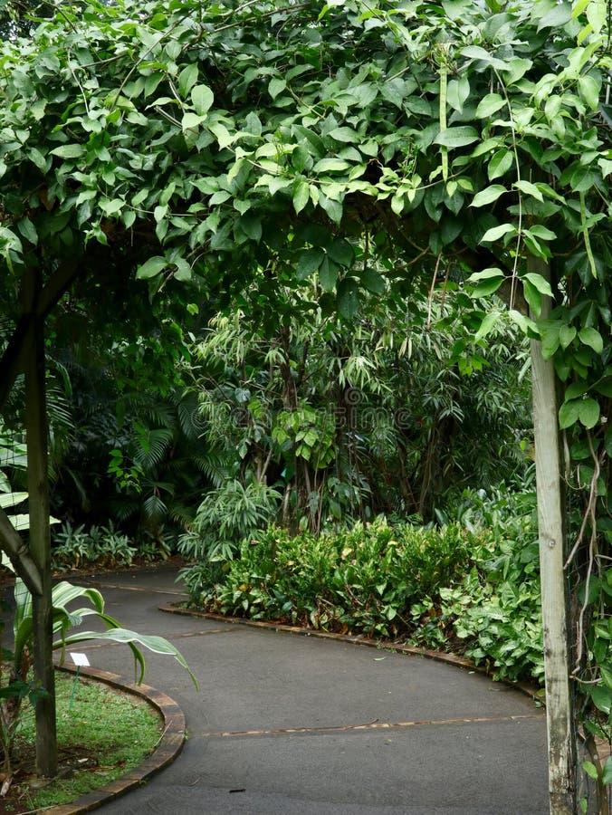 小径在黑暗的豪华的绿色庭院里 图库摄影