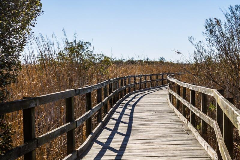 小径通过在后面海湾全国野生生物保护区的芦苇 免版税库存照片