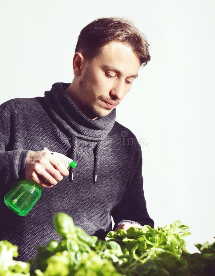 小心地灌溉植物的英俊的年轻种植者室内 烹调,营养,素食和生长概念 库存图片