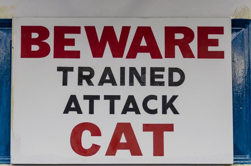 小心地训练为攻击猫 免版税库存照片