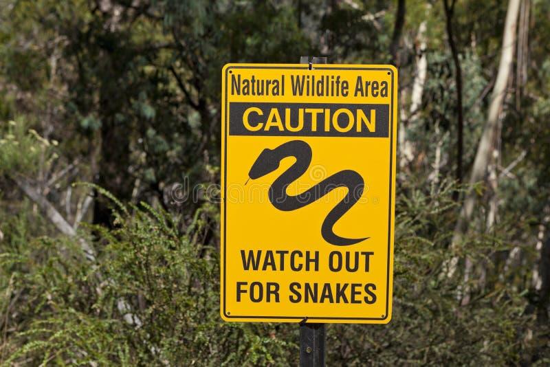 小心蛇曲折前进标志澳大利亚 库存图片