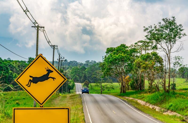 小心!野生生物在柏油路旁边的横穿标志在小小山附近和绿草调遣 旅游驾驶的蓝色汽车 库存图片