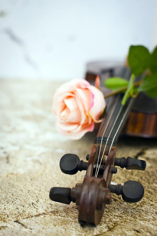 小提琴和桃红色玫瑰 免版税库存照片