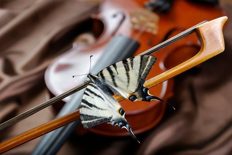 小提琴和蝴蝶 在弓的蝴蝶 缺乏swallowtail 风帆swallowtail 库存图片