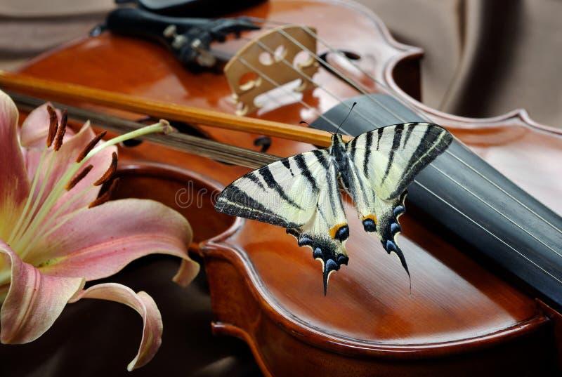小提琴和蝴蝶 在弓的蝴蝶 缺乏swallowtail 风帆swallowtail 图库摄影
