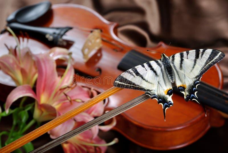 小提琴和蝴蝶 在弓的蝴蝶 缺乏swallowtail 风帆swallowtail 免版税库存照片
