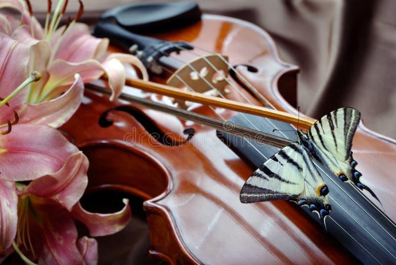 小提琴和蝴蝶 在弓的蝴蝶 缺乏swallowtail 风帆swallowtail 库存照片
