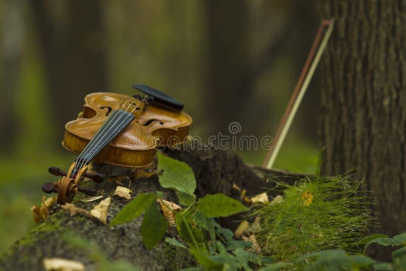 小提琴在秋天森林里 库存图片